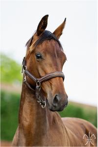 Photo cheval a vendre FUSCHIA DE LA GESSE
